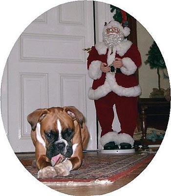 christmas dog hund mit weihnachtsmann weihnachten blog. Black Bedroom Furniture Sets. Home Design Ideas