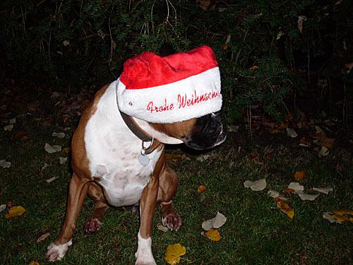 Hund als Weihnachtsmann
